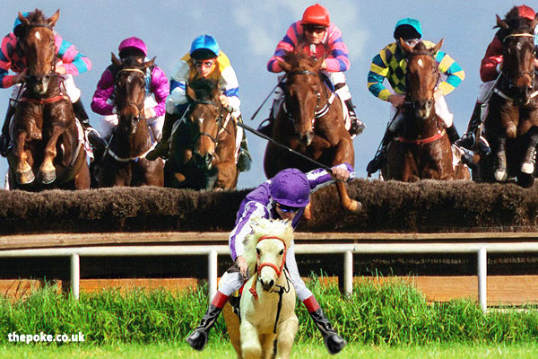 shetland ponies will race at goodwood the poke