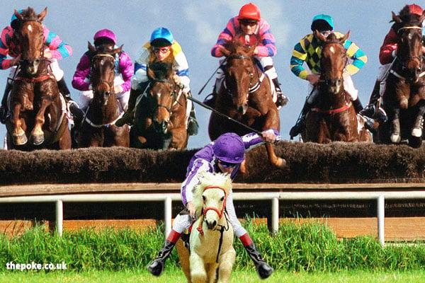 shetland ponies at goodwood