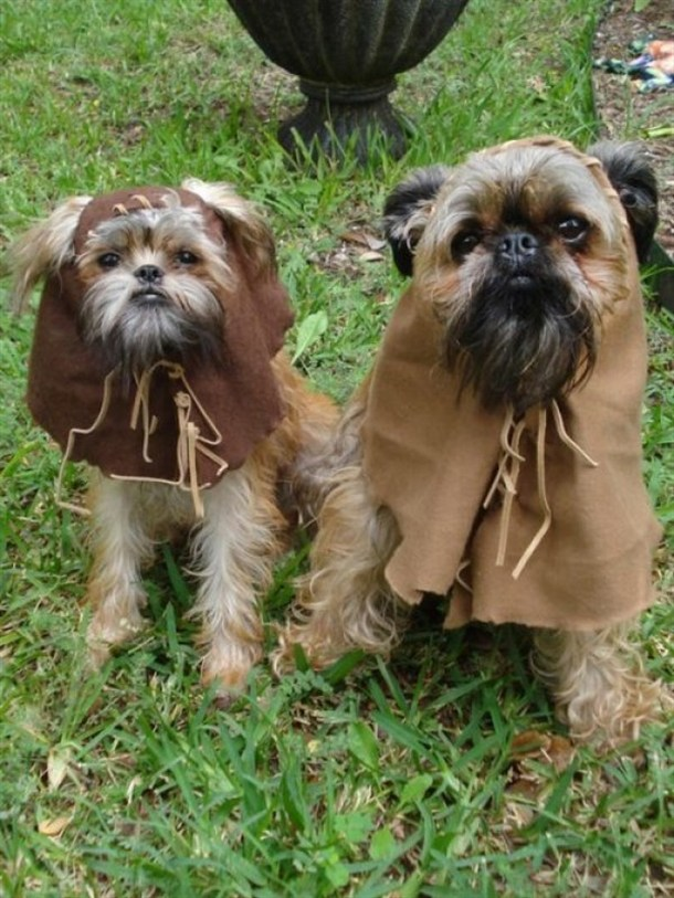 ewok dog costume shih tzu ewok puppies the poke 1688