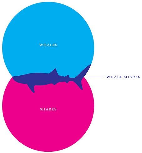 Whale Shark Venn Diagram Auto Electrical Wiring Diagram