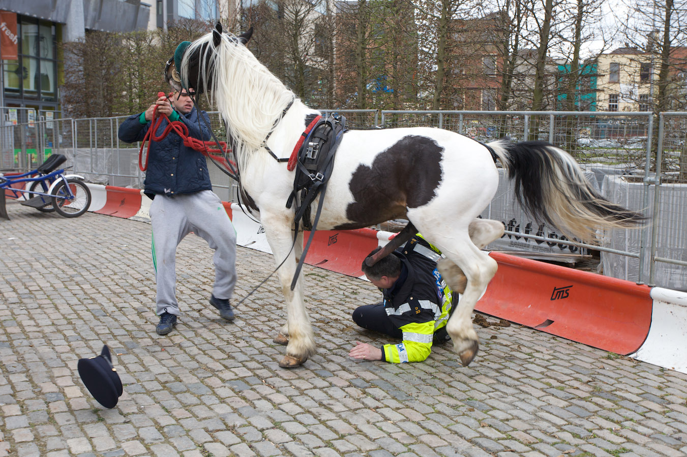 Horse mounts Policeman [THE VIDEO] | The Poke