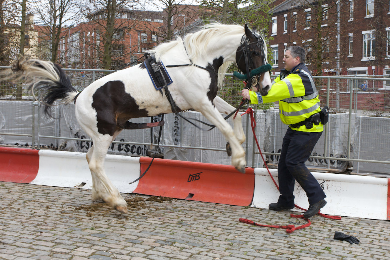 Horse mounts Policeman [THE VIDEO] The Poke