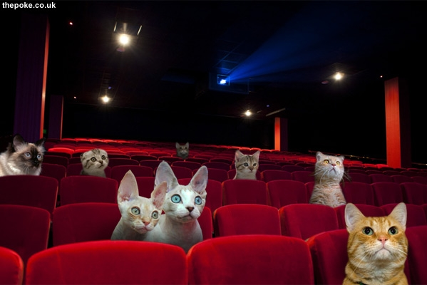 Cat cinema opens in Vegas