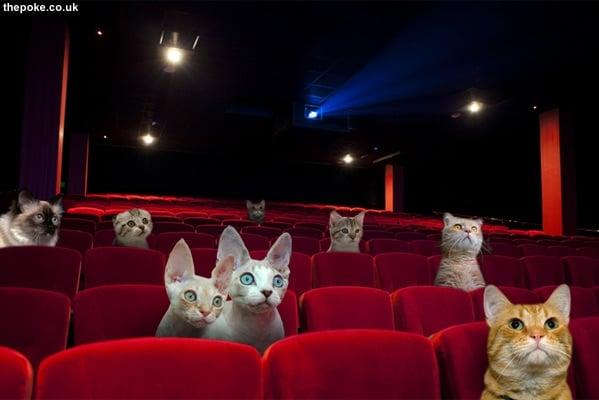 Cat cinema opens in Vegas