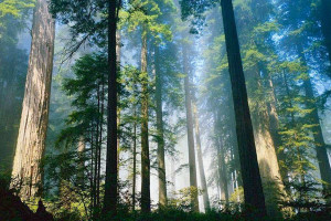 forest_dean