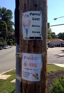 parrot-lost-vs-parrot-BBQ
