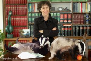 badger_lawyer