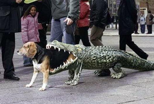 Diy Dog Collar Costume