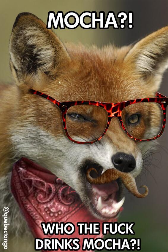 The Hipster Animal Kingdom The Poke