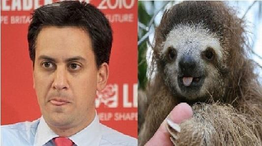 12 Sloths That Look Like Ed Miliband