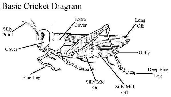 A Simple Diagram To Help Anyone Struggling To Understand The Cricket on Female Human Body Parts Diagram
