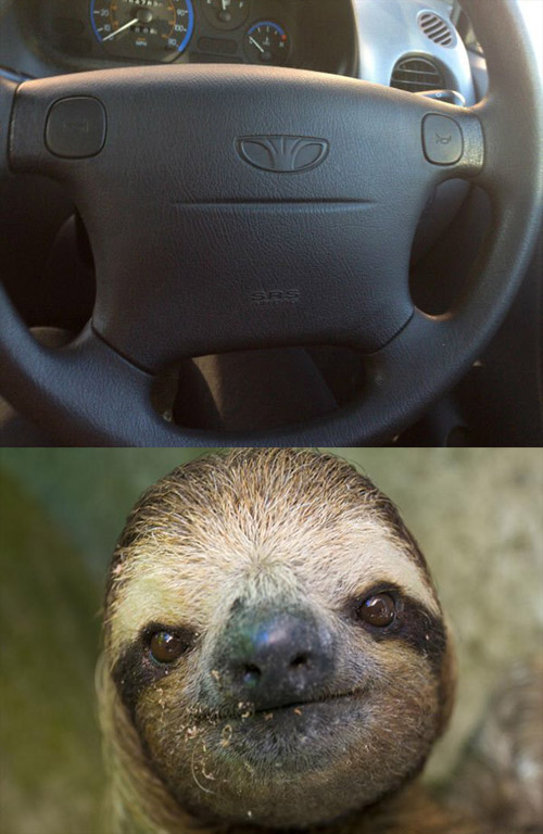 contact sloth lookalike of the day the poke contacter amazon sloth lookalike of the day the poke