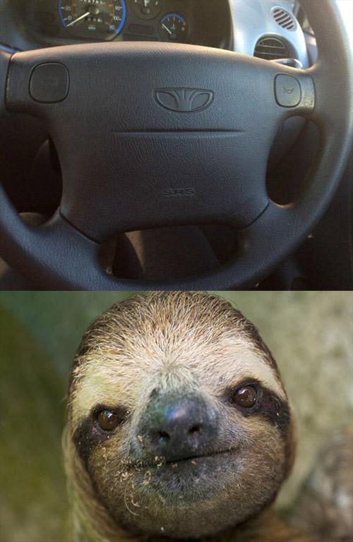 Sloth Lookalike Of The Day The Poke