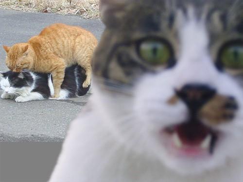 animal photobomb funny 16