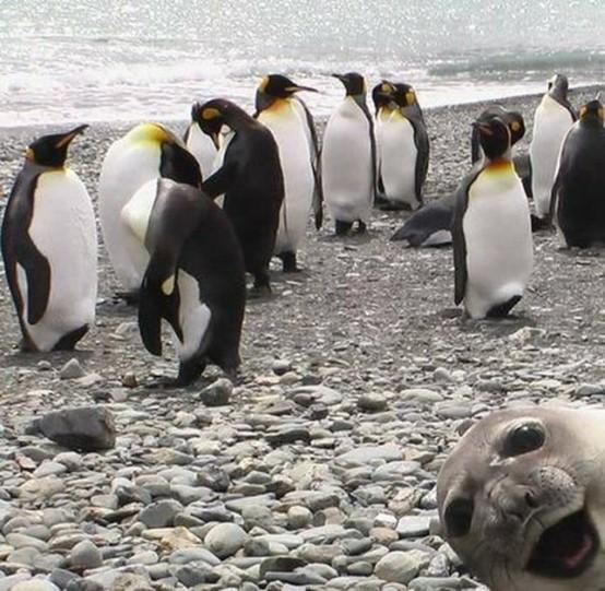 animal photobomb funny 21