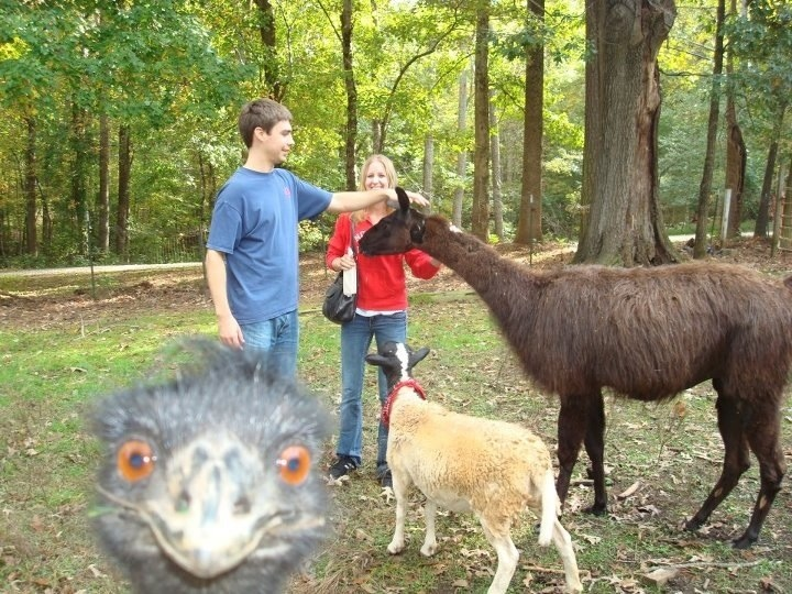 animal photobomb funny 9