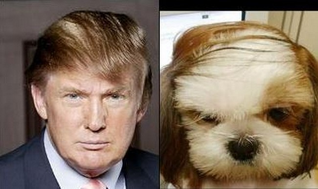 your attention please 11 dogs that look like celebrities