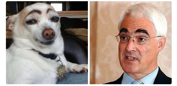 Tam-Britton-on-Twitter-Cant-stop-laughing-at-this-dog-that-looks-like-Alistair-Darling.-indyref-http-t.co-XUrFgFk9es-
