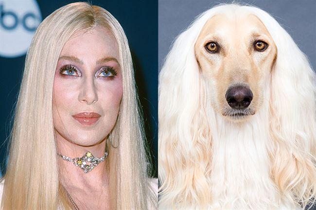 celebrity-dog-cher