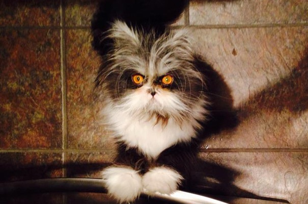 Meet the cat whose stare will devour your soul the poke