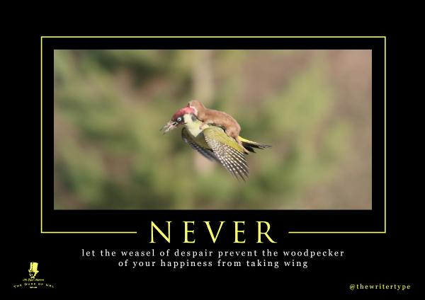 the internet reacts to a weasel riding a woodpecker the poke
