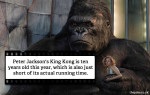 hollywood_obs_1kong