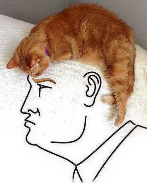 Trump >> Donald Trump cat art The Poke