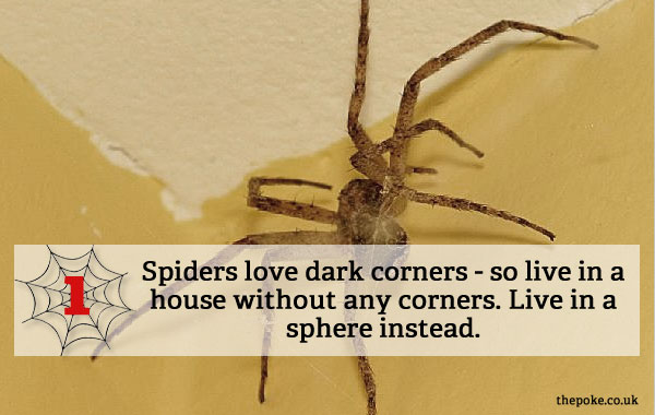 7 easy ways to keep spiders out of your house the poke for How to keep spiders out of the house
