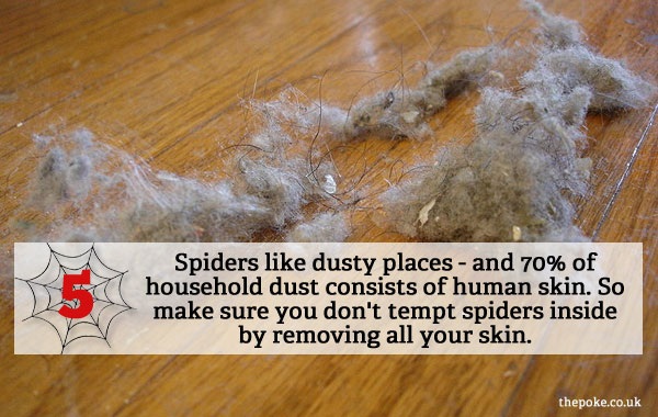 How to keep dust out of your house 28 images how to for How to get spiders out of your house