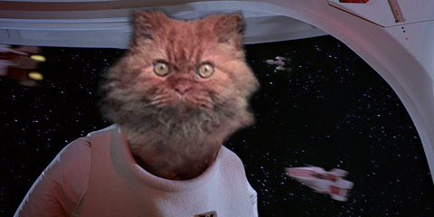 Privacy Policy >> Well done internet, 'Death Stare Cat' has been turned into ...