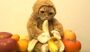 monkey_cat