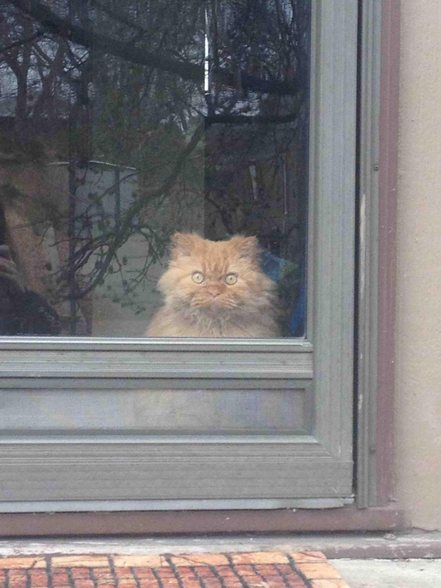 This cat has mastered the death stare the poke