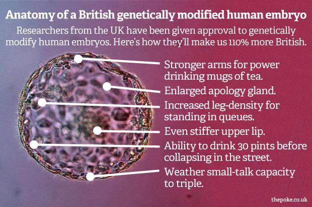 [Image: british_embryo_anatomy.jpg]