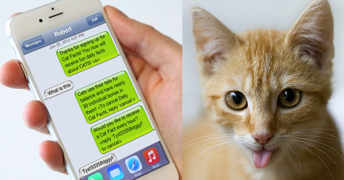 this guy pranking his cousin with a fake cat facts text messaging