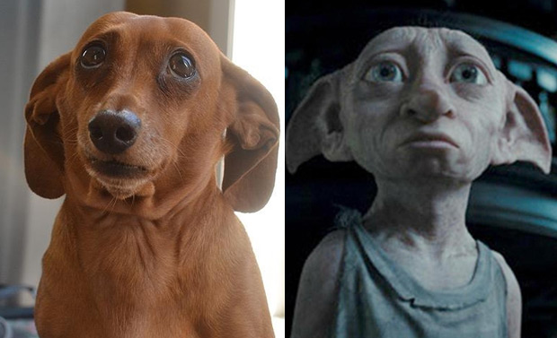 12 Dogs That Look Like Other Things The Poke