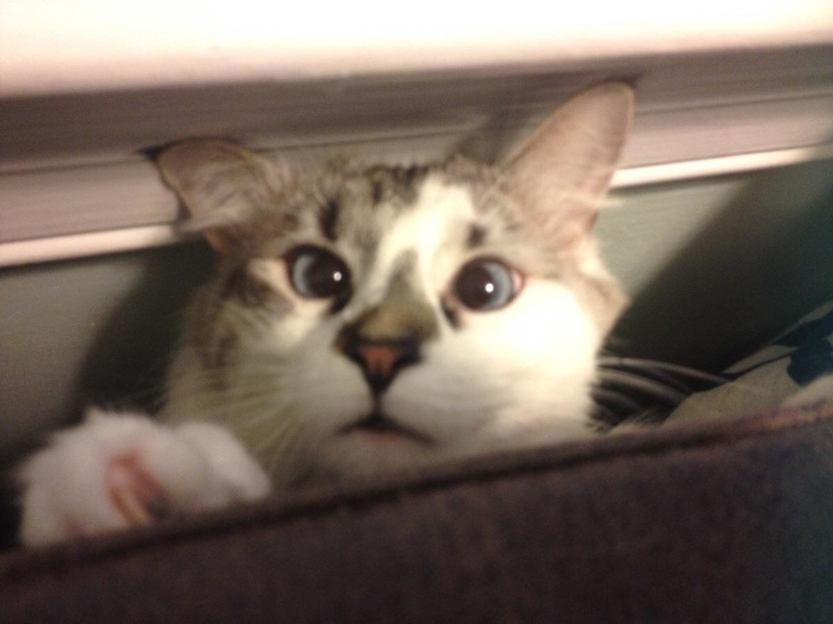 German company builds the ultimate indoor cat walkway softpedia -  Via