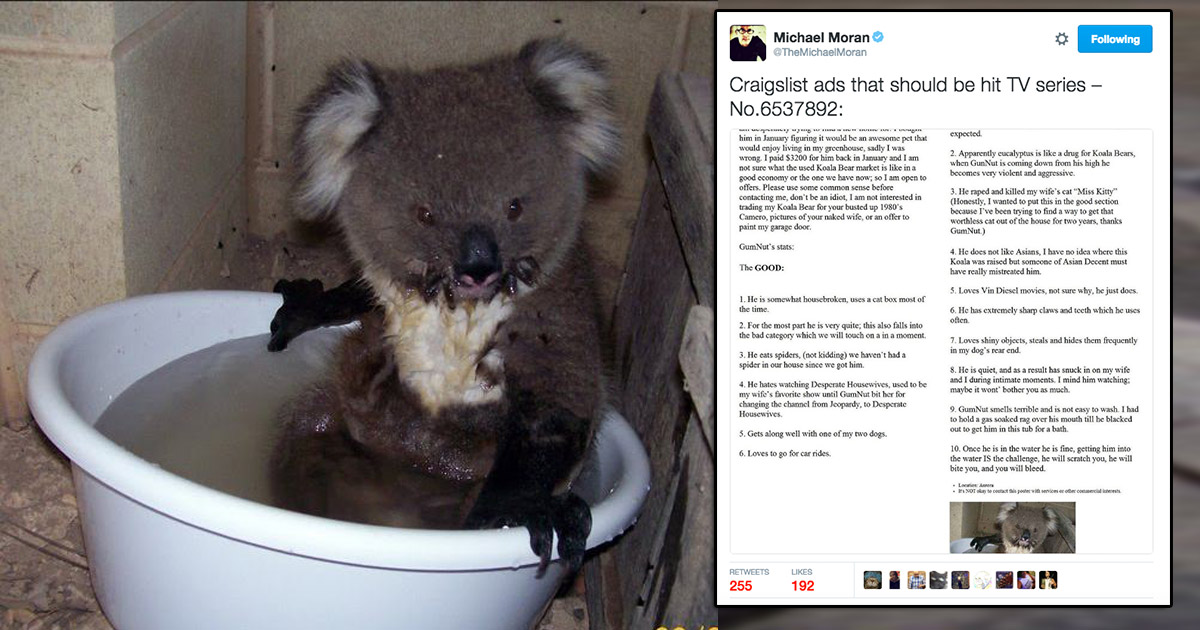 This Craigslist ad with some guy selling a koala bear sounds like a