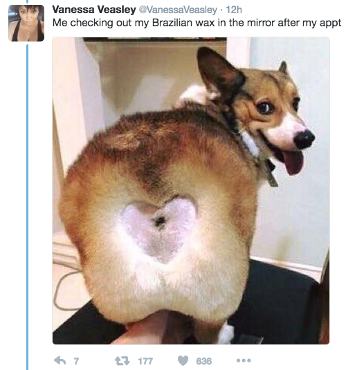 Heart On Dog S Bum
