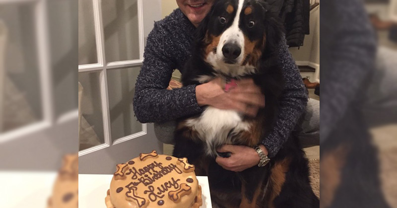 Proof That Buying A Dog A Birthday Cake Isn T A Waste Of