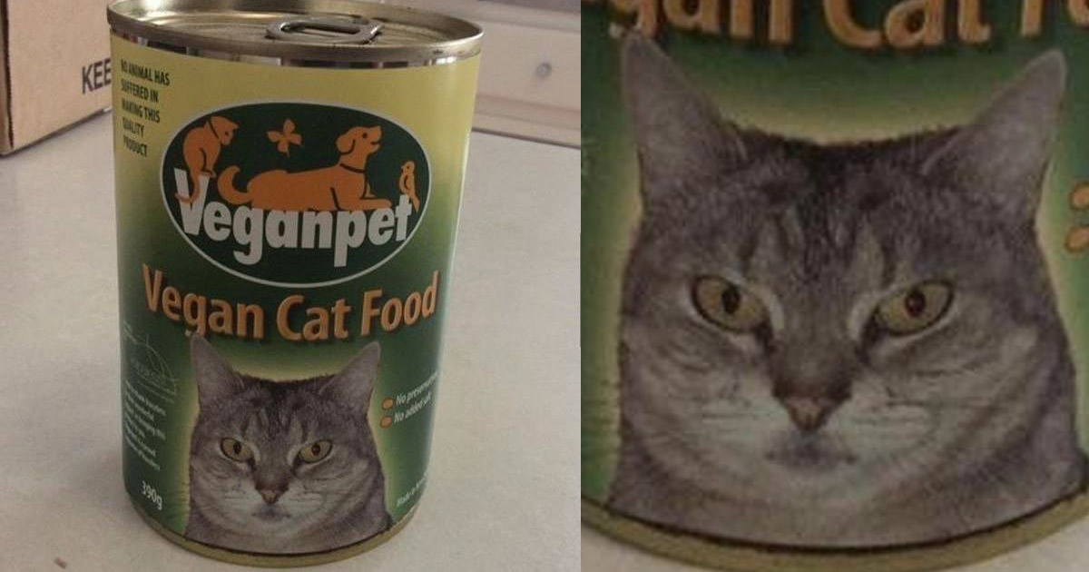 Cat Looks Pretty Miserable On This Vegan Catfood But Its