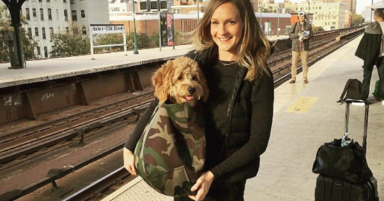 New York Subway Bans Dogs Unless They Fit In A Bag So This - Nyc subway bans dogs unless fit bag new yorkers reacted