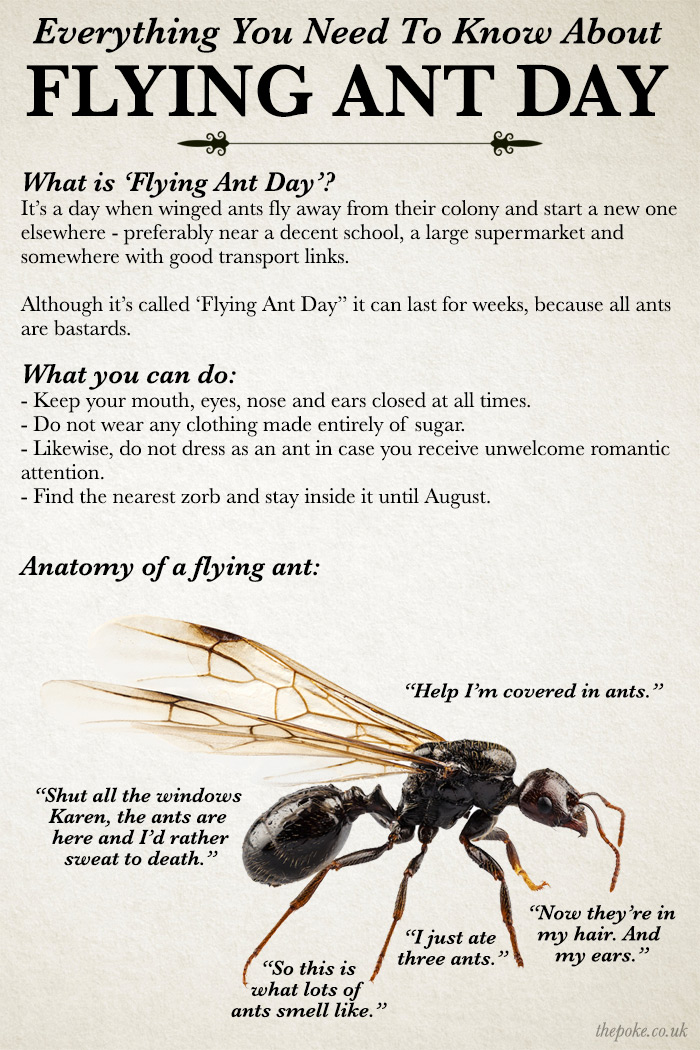 Everything you need to know about flying ant day The Poke