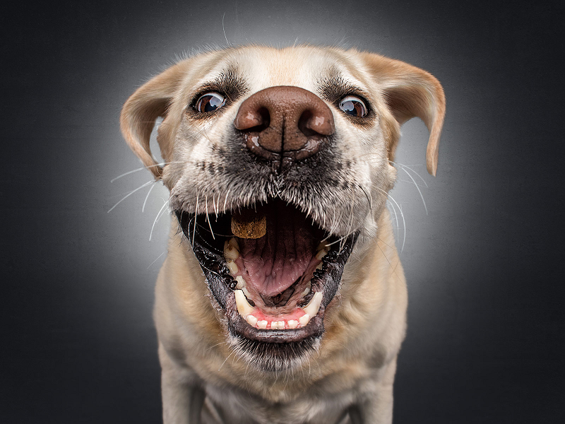 Is there anything more joyous than a dog catching a treat? – 15 pics to show there isn't