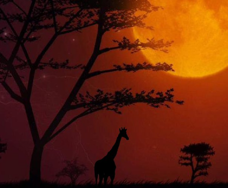 There's something a little different about this super blood wolf moon photo - can you spot it?