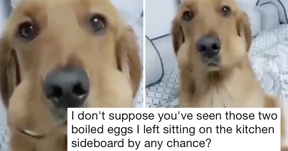 This good dog was caught in the act and the payoff is just perfect comic timing