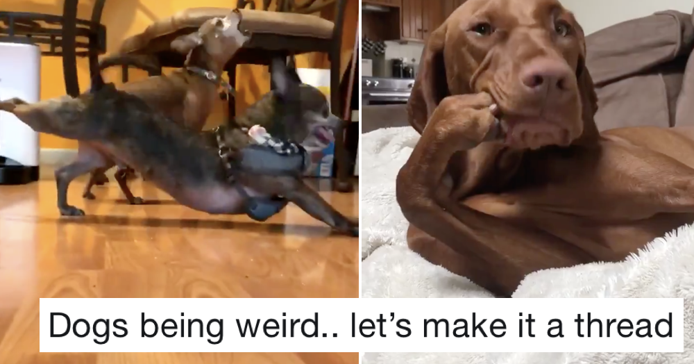Just 19 videos of dogs doing weird things to make your day better