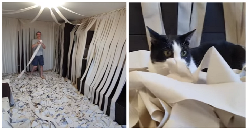 This cat in a room full of toilet rolls is living his best life