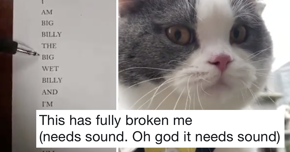 'Imagine finding out you have the first cat in the world that can speak but it can only say this'