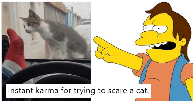Someone got instant karma for scaring a cat – and we're here for it