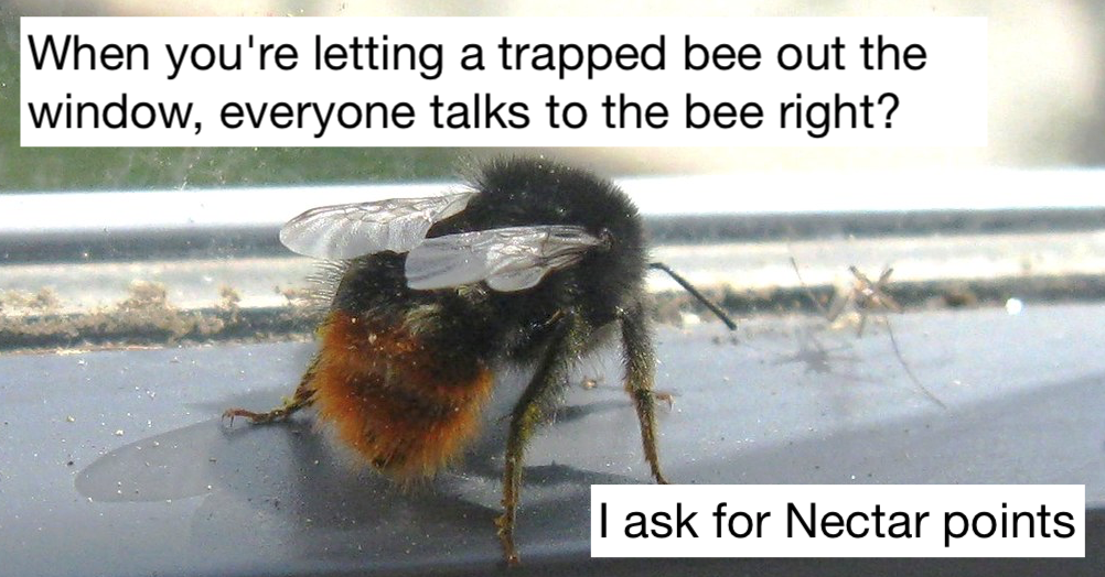 This tweet about trapped bees prompted lots of lovely replies about people's Bee Rescue Service™